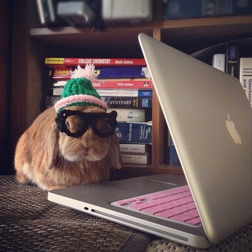 Hipster bunny's got the look down - July 2, 2012Rabbit, Friends, Animaux Assoiffé, Cutest Bunnies, Hipster Bunnies, 13 Bunnies, Things Bunneh, Bunnies Intellectual, Animal