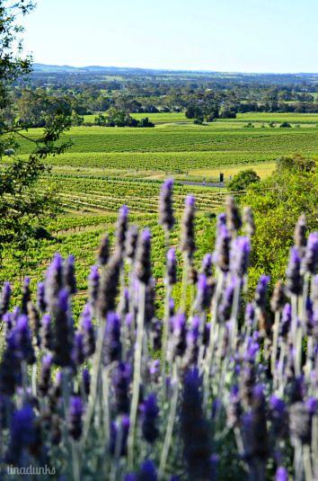 Lavender at Bethany