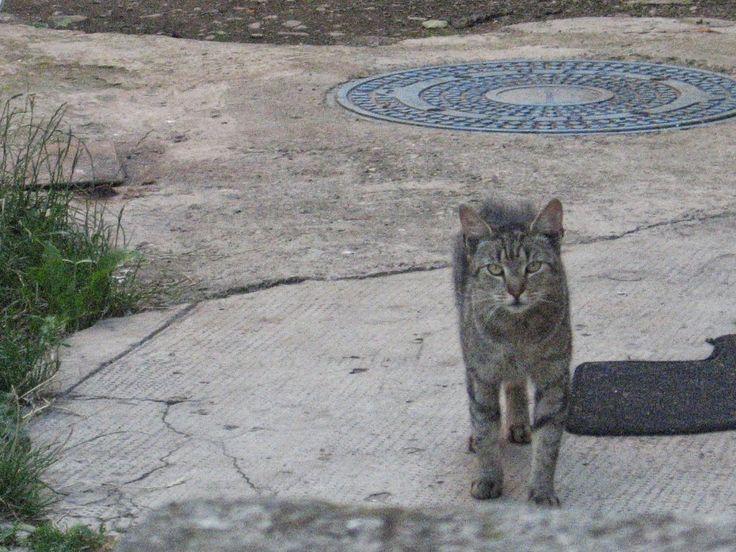 Multimédia kör Téka: Altalaban nem szeretem a macskakot...