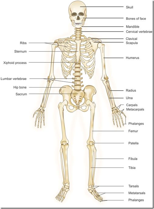 48 best images about health on pinterest diagram of throat bones the human body diagram of throat