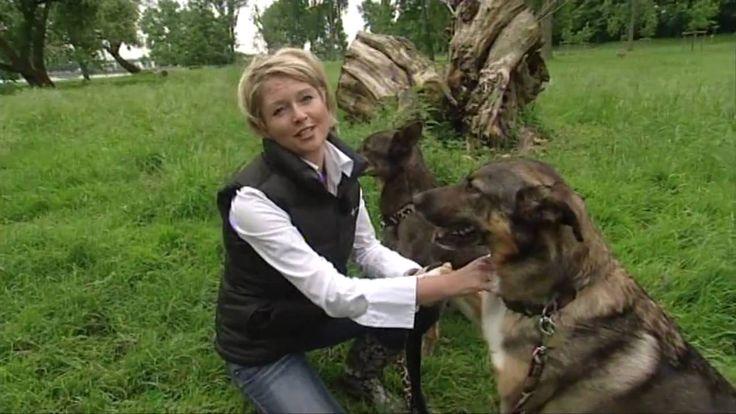 Julius- K9® Hundegeschirr Test , WDR Fernsehen