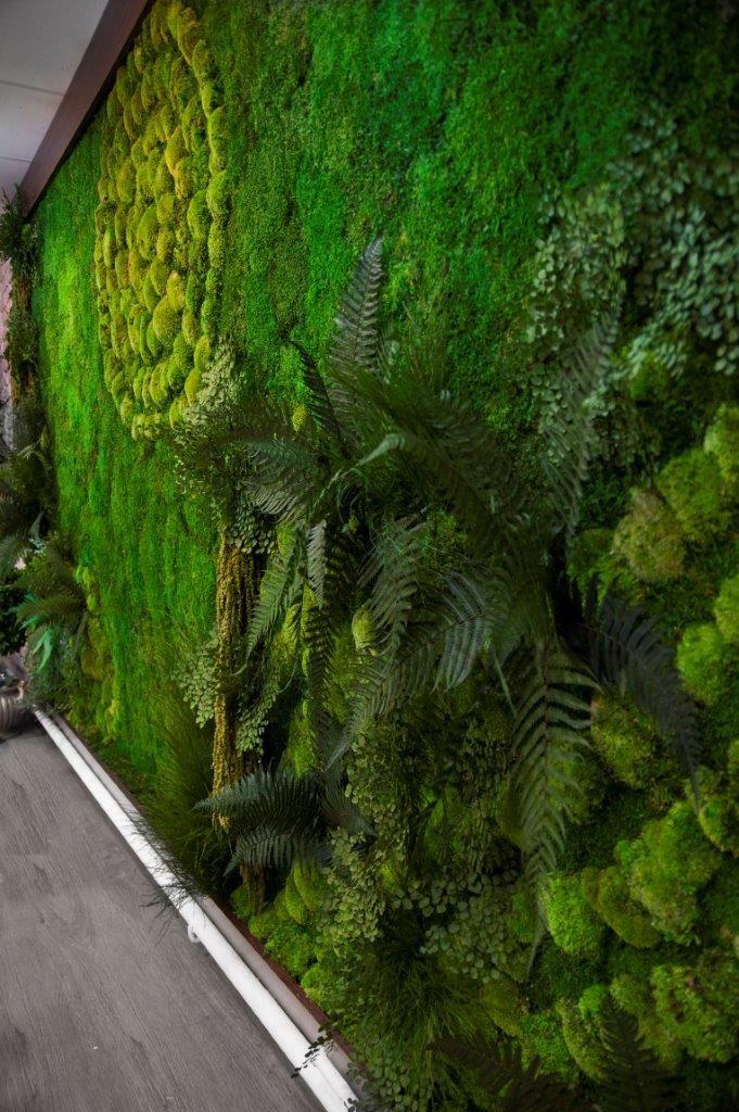 Paprocie, mech i trawy tak wyglądają w pełnej krasie rośliny stabilizowane.