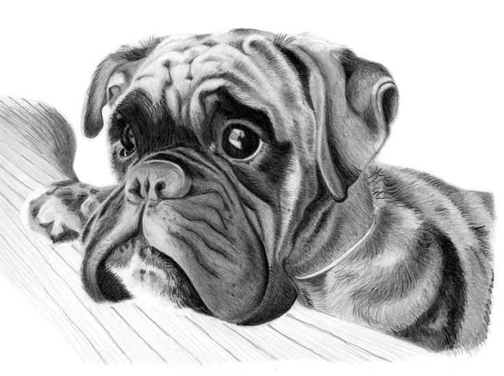 Dog Face Drawin...