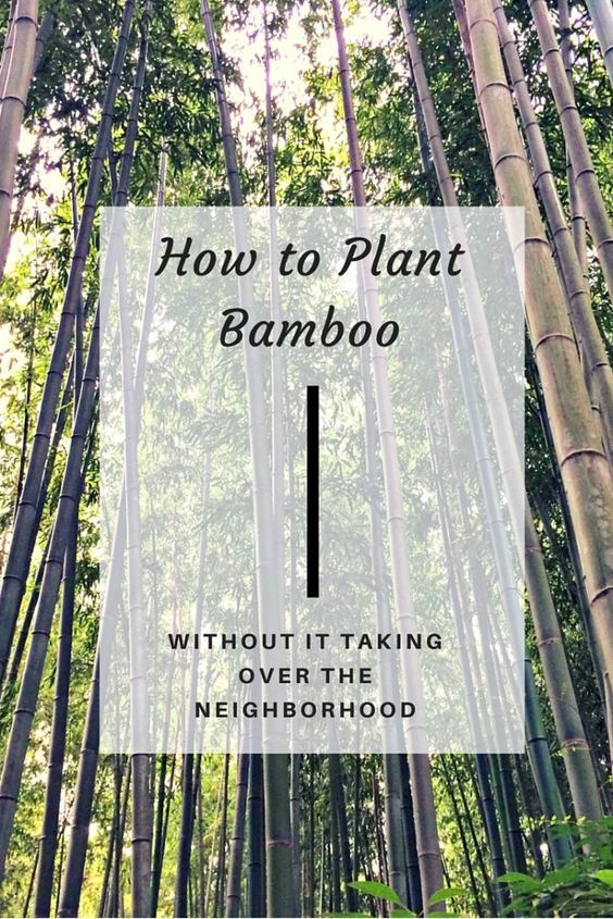How to Plant Bamboo {Without it Taking Over the Neighborhood