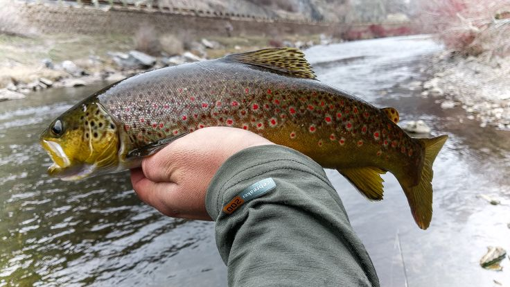 17 best images about fly fishing 39 s finest on pinterest for Best fishing in utah