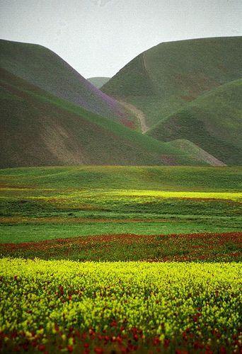 Blooming Desert, via Flickr. Taken in Maimana, Faryab, Afghanistan. Posted by robysaltori (Roberto Saltori).
