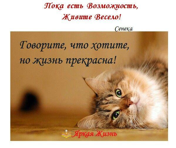 Цитаты с картинками на тему жизнь прекрасна