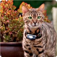 35 best Pet Solutions images on Pinterest