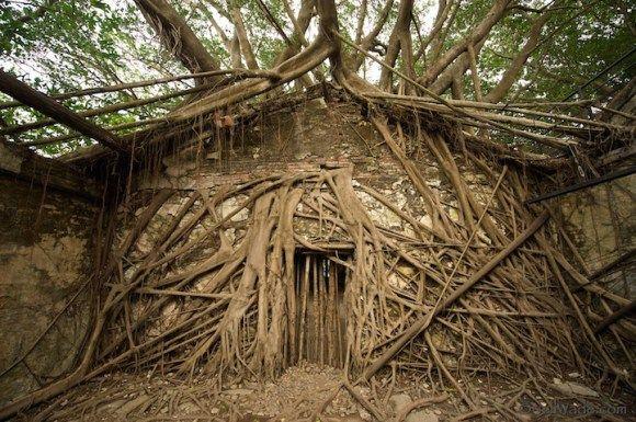 O poder do abraço da natureza em um armazém abandonado.