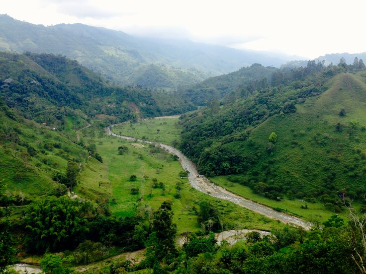 Valle de Cocora - Quindio - Colombia