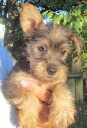 Adopt A Dog Kansas City Ks