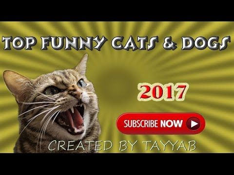 Funny cats and dogs - The most funniest videos top compilation 2017.Top animals compilation - YouTube