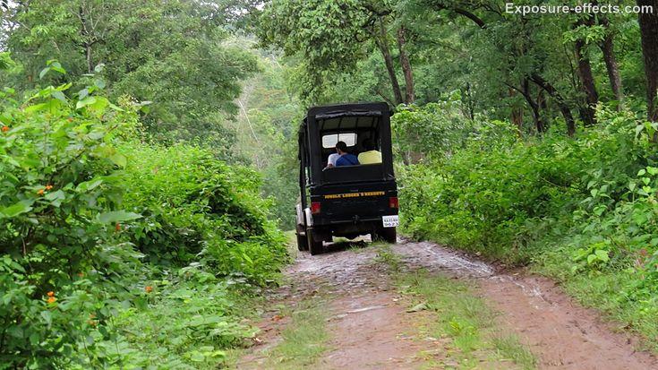 Wildlife Jeep Safari at Dubare Elephant Camp - Jungle Lodges and Resorts
