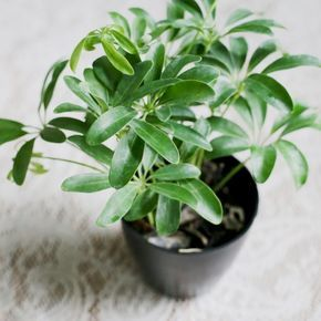 150 best images about misc on pinterest for Low maintenance potted plants indoor