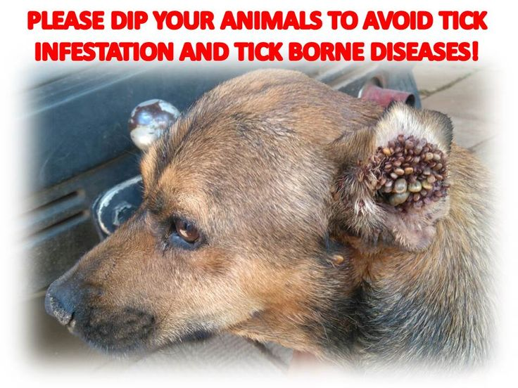 All about Ticks  http://www.jhbspca.co.za/our-news