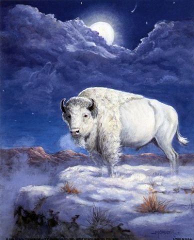 The Native Americans have legends about White buffalo, which are extremely rare. It is said that A white buffalo appeared in the form of a woman who wore white hides.