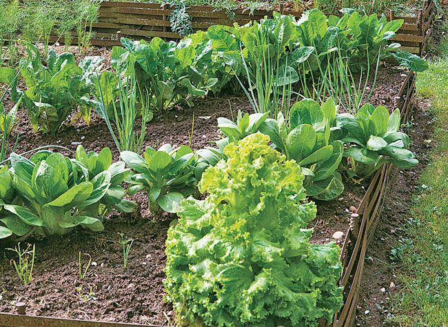Alternance, bonnes associations, bon emplacement des différents légumes au sein de la parcelle… L'organisation de la culture dans un potager en carré.