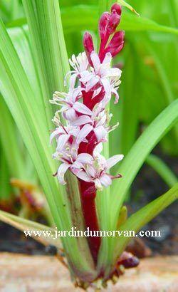 59 best jardinage plantes images on pinterest