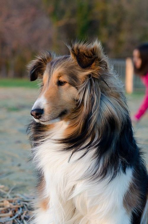 Love this Dog Breed