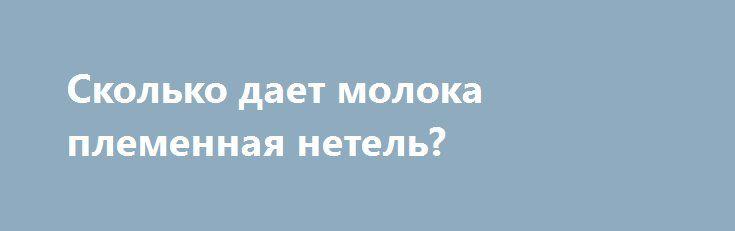 Сколько дает молока племенная нетель? http://kamagro.ru/prodazha-krs