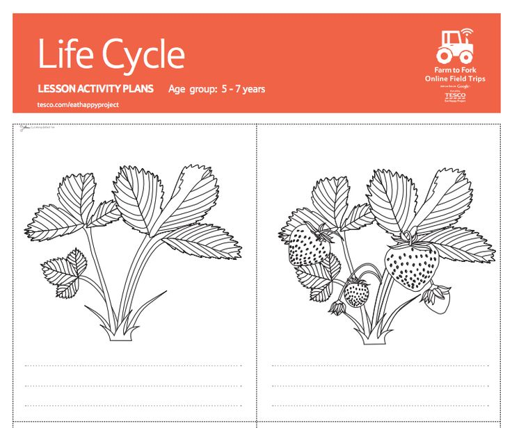 The 25+ best Life cycle of plants ideas on Pinterest | Lifecycle ...