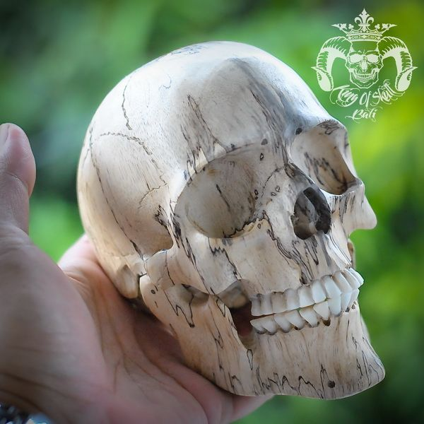 RARE Hand Carved Sculpture Tamarind Wood Human Skull Realistic Lots Picture THB1