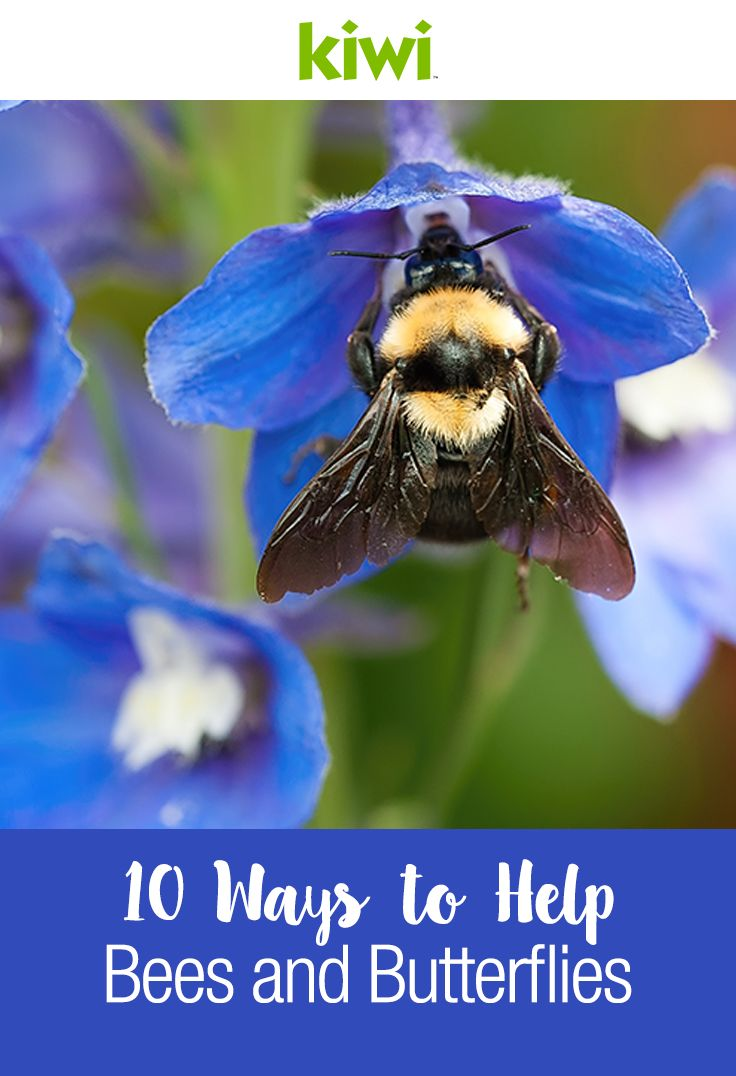 Burpee Seed Company suggests things every gardener can do to help bees and butterflies thrive.