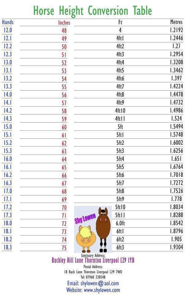 Measuring a Horse.
