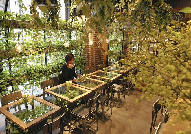 Japanese cafes become urban forests with flowers, greenery