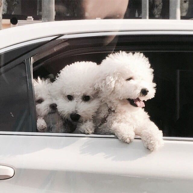 Cute Puppy Dog Animal Pets Baby Animals Puppies Cute