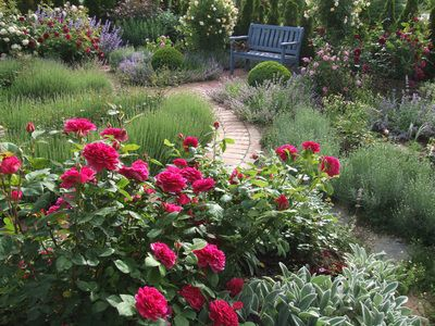 Wohnen Und Garten De 46 best enchanting roses images on enchanted backyard