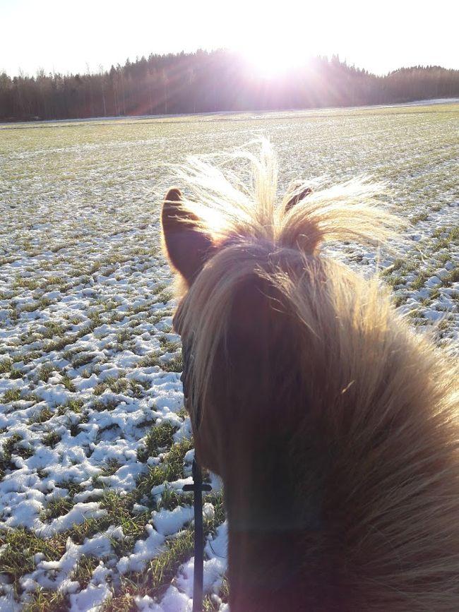Kateva Tekeva Muita Puuhasteluja Hevoset Tekemista Lifestyle