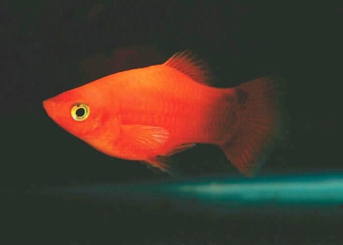 Best Fish Food Brand For Goldfish