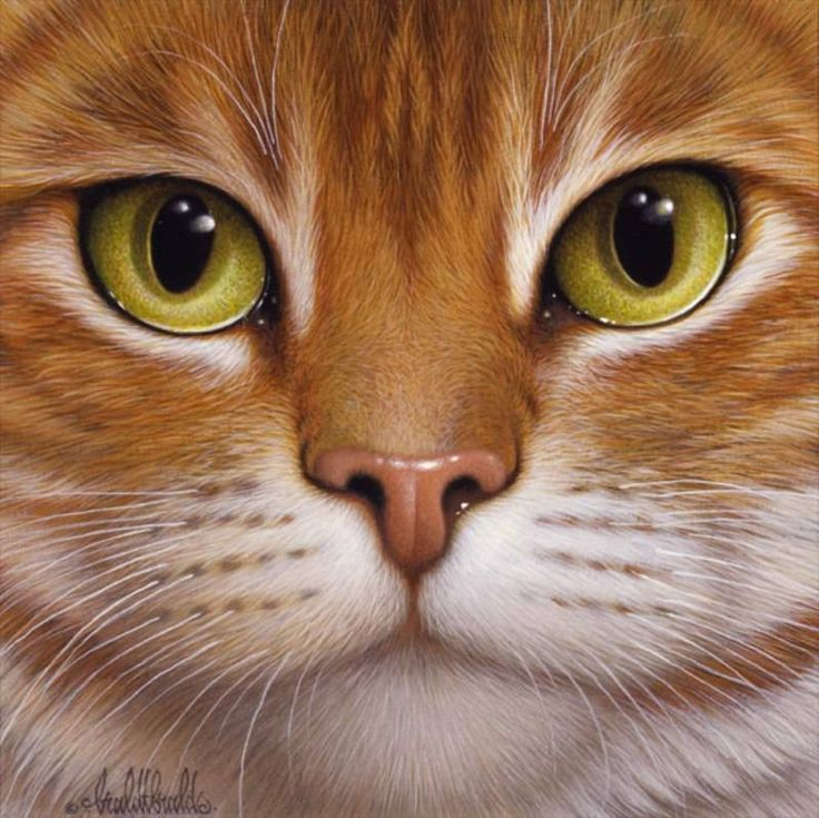 "Braldt Bralds (Dutch artist) ""Cats"" http://www.painterlog.com/2013/06/braldt-bralds-dutch-artist-cats.html"