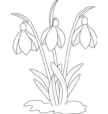 snowdrop template - Google Search