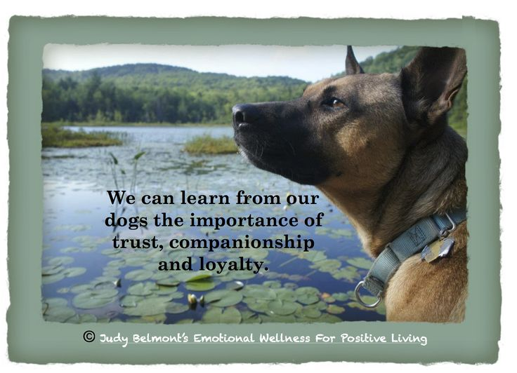 Loyalty, trust and companionship For more Daily Positive