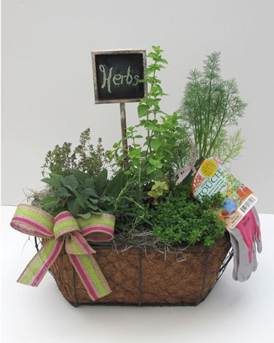 190 best Herbs images on Pinterest | Gardening, Herbs and Plants