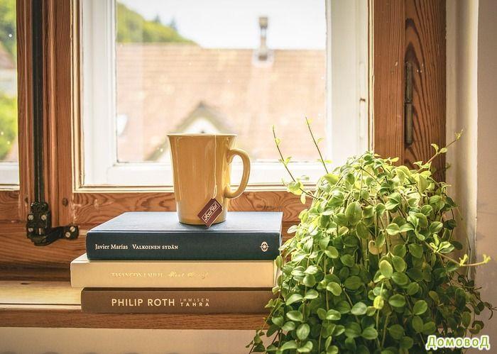 11 комнатных растений, которые могут выжить даже в самом темном углу