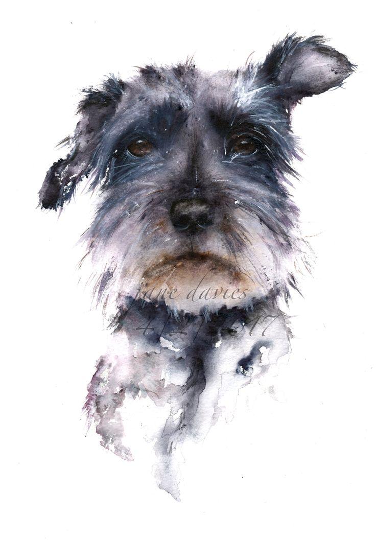 Schnauzer painted in watercolour by artist Jane Davies