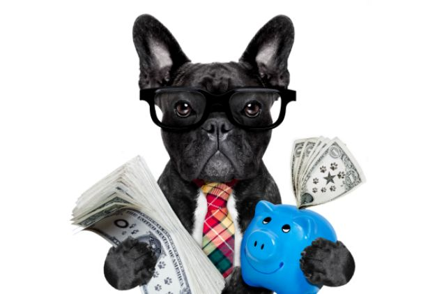 Pet owners are spending and numbers don't lie: pet product stocks have earned twice as much in return when compared to the S & P 500 index market standard.