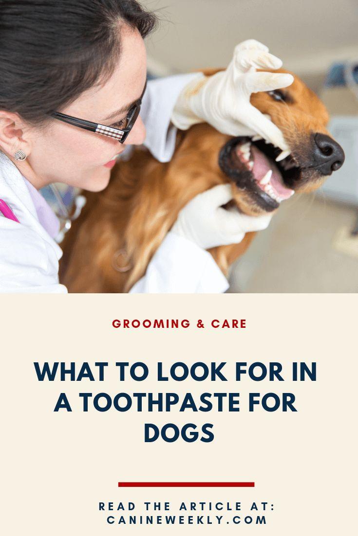 best puppy dog toothpaste