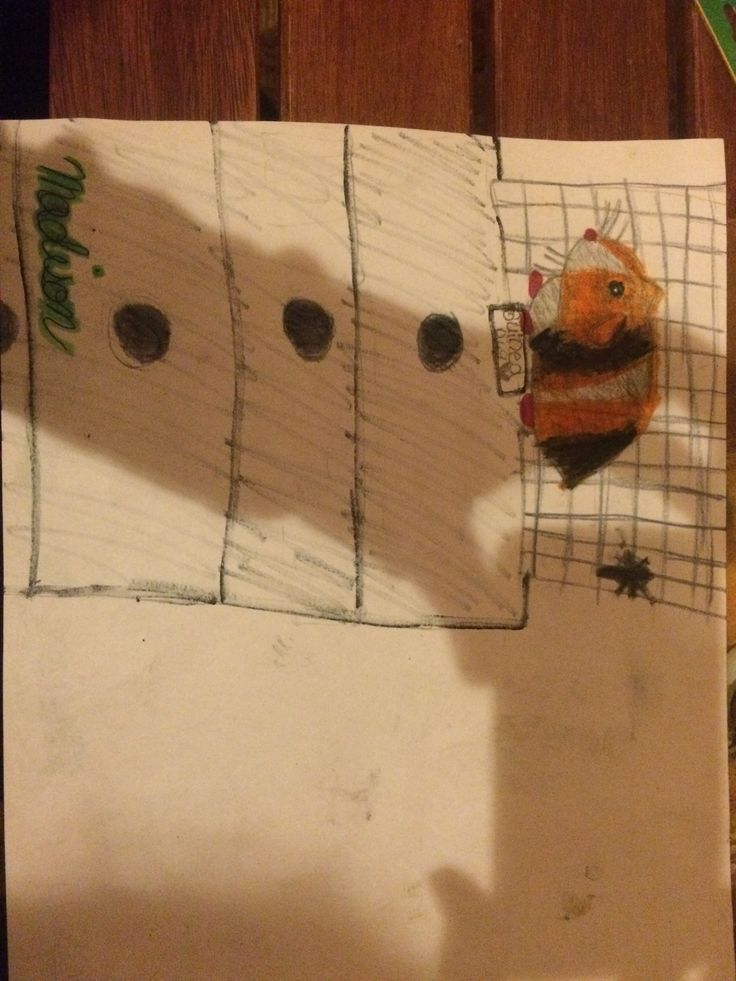 My friend's guinea pig drawing