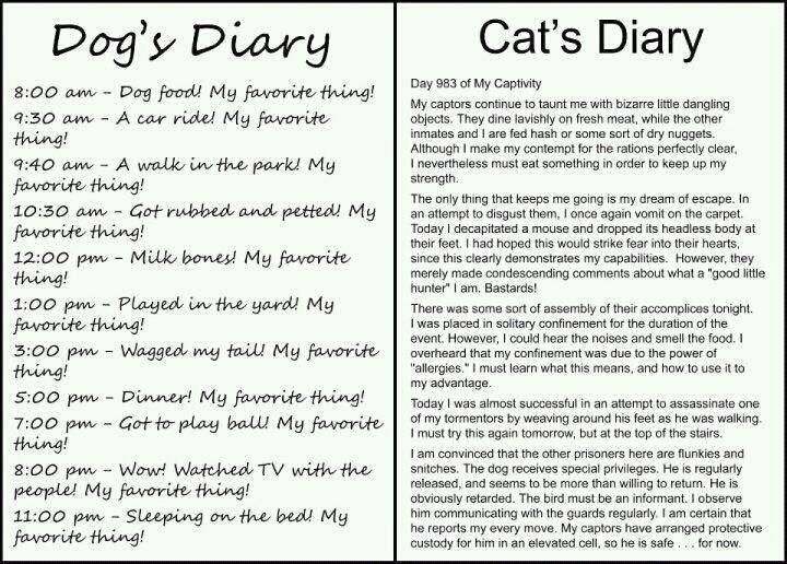 best compare and contrast images beds teaching  dog s diary vs cat s diary
