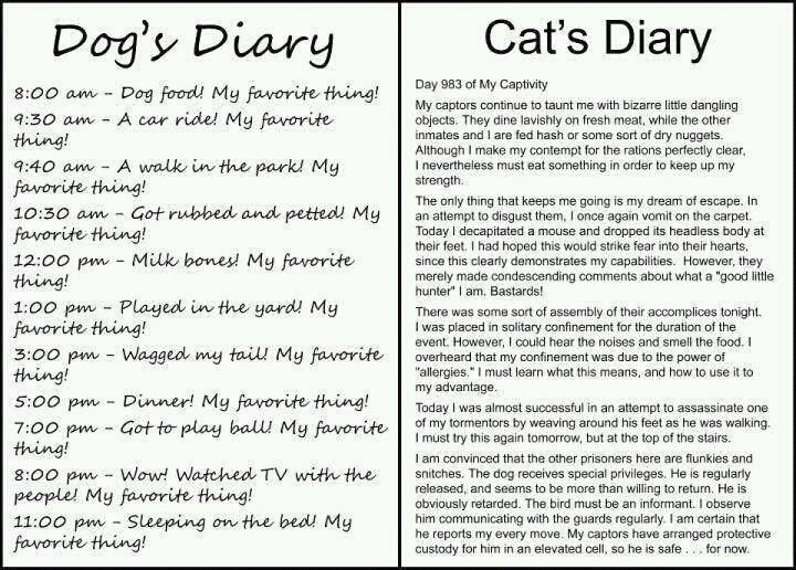 dog diary vs. cat diary