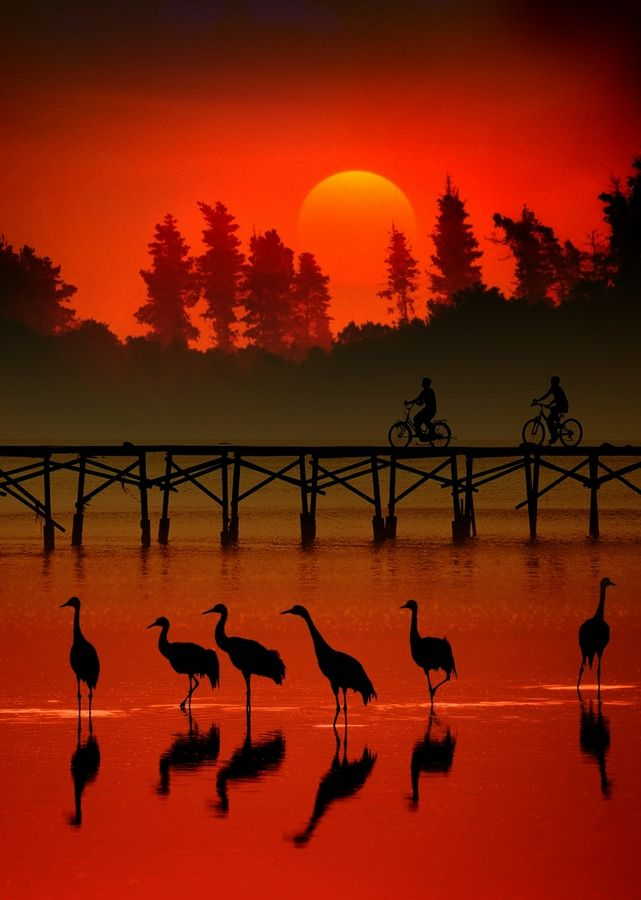 red with cranes.