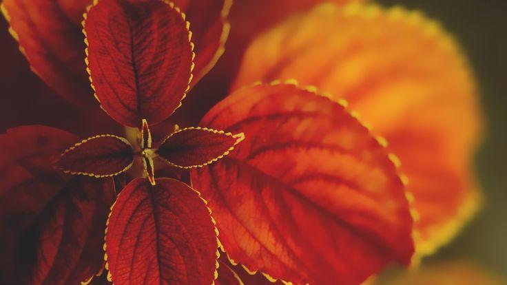 Karunesh - Call of the Mystic (Beautiful Relaxation Music) [Full album +...