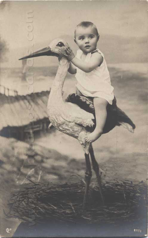 Baby and Stork~so it is true... that's where babies come from...