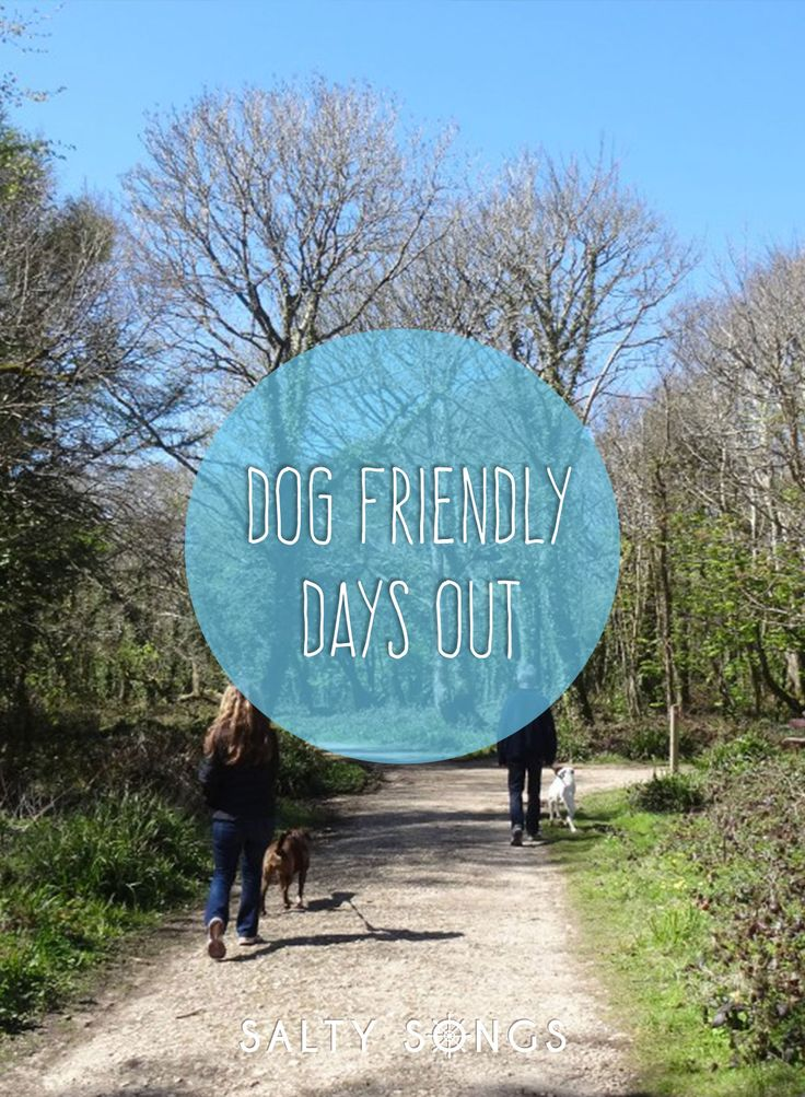 Dog friendly days out in Cornwall