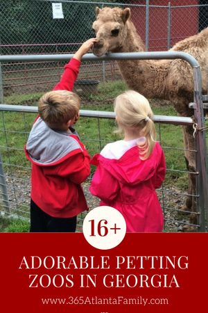 Wondering where is the best petting zoo near me? We have a list of 16+ animal farms in Georgia with petting zoos. A few will likely surprise you! We've grouped them by Atlanta area, and both north and south of Atlanta, as well as mobile petting zoos