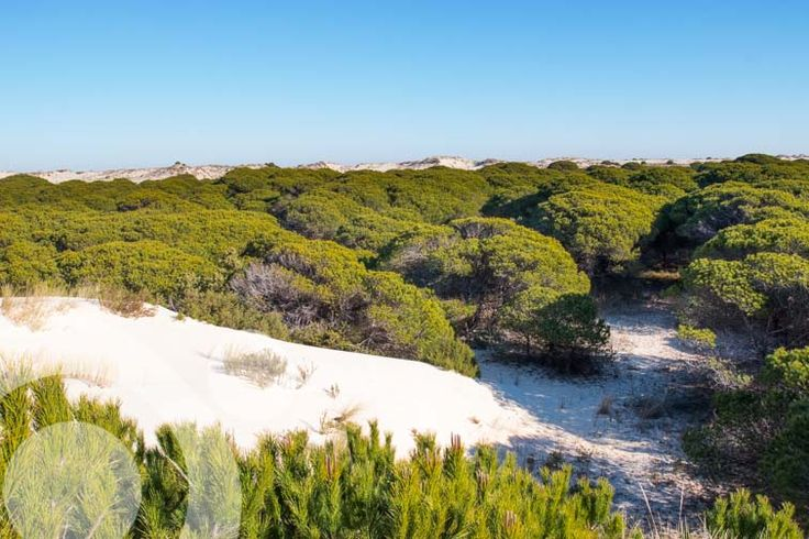 movile #dunes in Doaña beach. More information to plan your trip to #Doñana in www.qnatur.com